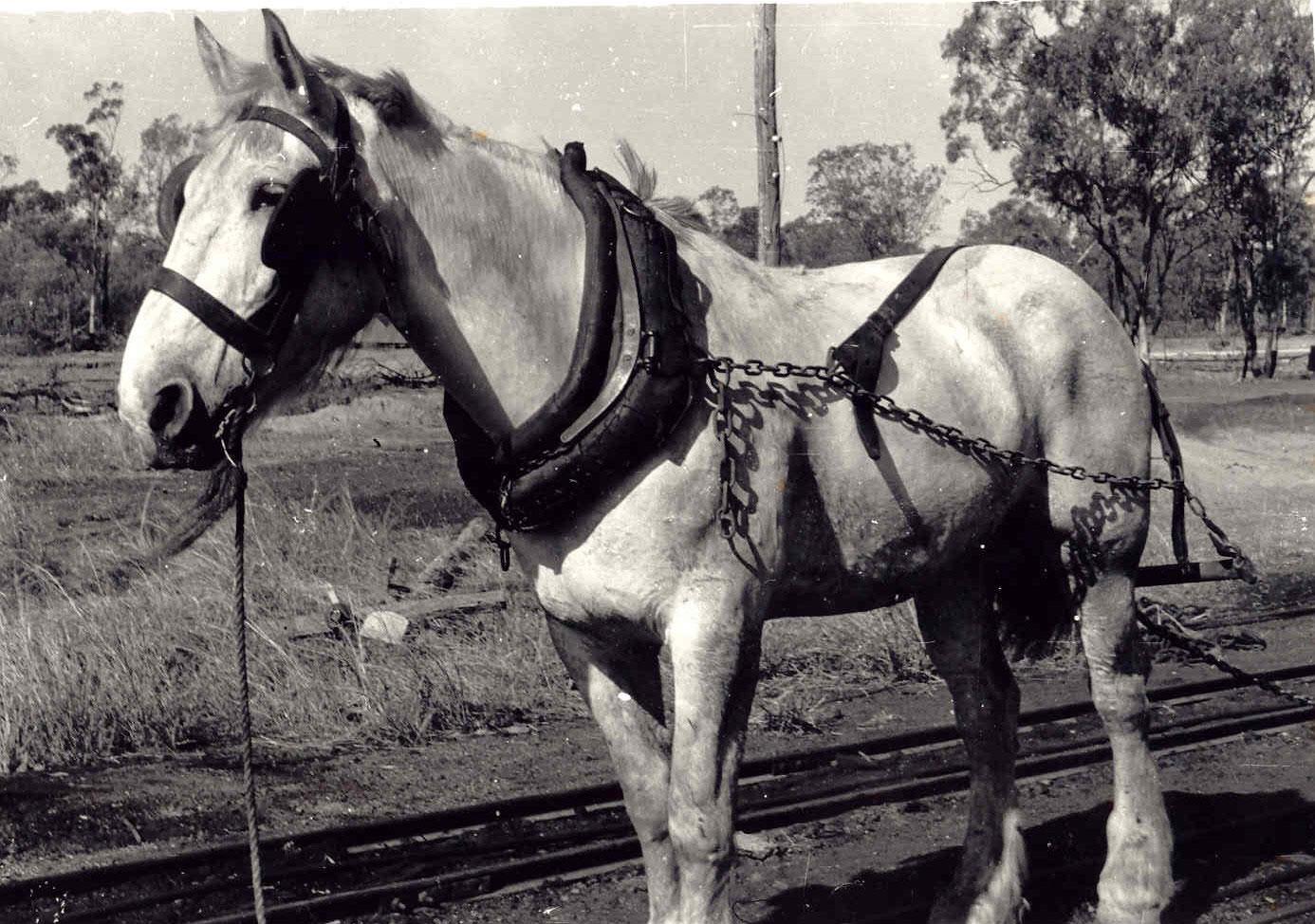 Della the Pit Pony